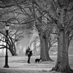 Maria Fernandez, Dog Walking with Baby
